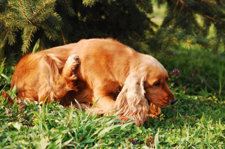 How To Get Rid Of Dog Mites In The House